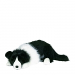 Lounging Border Collie
